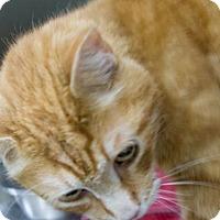 Adopt A Pet :: Morrisey - Millersville, MD