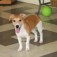 Adopt A Pet :: Periwinkle - Bardstown, KY