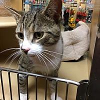 Adopt A Pet :: Fritz - Hamilton, ON