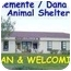 Photo 2 - Domestic Mediumhair Cat for adoption in San Clemente, California - SHILOH