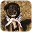 Photo 3 - Labrador Retriever Mix Puppy for adoption in Cranford, New Jersey - Luke