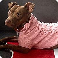 Adopt A Pet :: Hershey Kiss - Grafton, OH