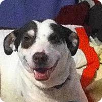 Adopt A Pet :: Sandy - Plainfield, CT