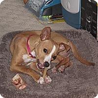 Adopt A Pet :: Autumn - Mount Kisco, NY