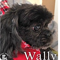 Adopt A Pet :: Wally - Essex Junction, VT