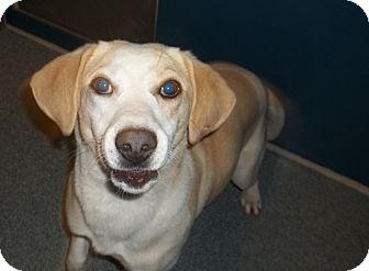 Hound (Unknown Type) Mix Dog for adoption in Warrenton, North Carolina - Linda