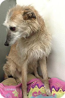 Hound (Unknown Type) Mix Dog for adoption in Hibbing, Minnesota - Lioness
