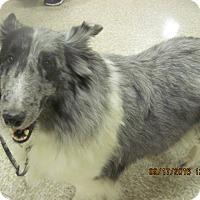 Adopt A Pet :: Alice - apache junction, AZ