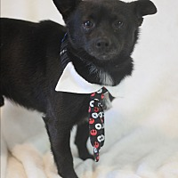 Adopt A Pet :: Chip - Dalton, GA