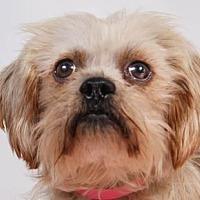 Adopt A Pet :: Mamie - Colorado Springs, CO