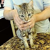 Adopt A Pet :: Sushi - San Tan Valley, AZ