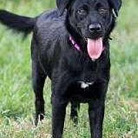Adopt A Pet :: Sissy - Sarasota, FL