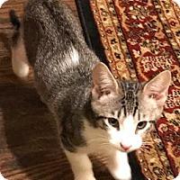 Adopt A Pet :: Max - Santa Fe, TX