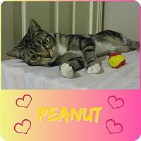 Adopt A Pet :: Peanut - Jeffersonville, IN