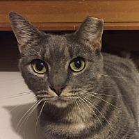 Adopt A Pet :: SHELBY- Loving Sweatheart - New York, NY