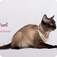 Adopt A Pet :: RuPaul - Sherman Oaks, CA