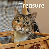 Adopt A Pet :: Treasure - Pleasantville, NJ