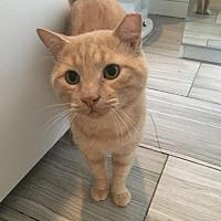 Adopt A Pet :: Sweeney - Brooklyn, NY