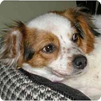 Adopt A Pet :: Daisy-PENDING - kennebunkport, ME