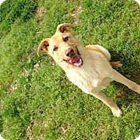 Adopt A Pet :: Sasha - Somers, CT