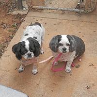 Adopt A Pet :: Mia & Tia - Clarksville, TN