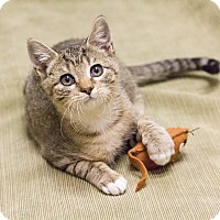 Adopt A Pet :: Oliver - Chicago, IL