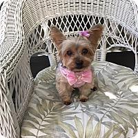 Adopt A Pet :: Maggie - Leesburg, FL