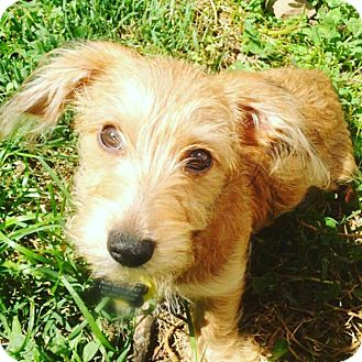 Terrier (Unknown Type, Medium) Mix Dog for adoption in Jersey City, New Jersey - Charo
