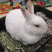 Adopt A Pet :: Primrose - Paramount, CA