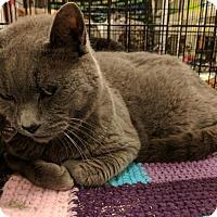 Adopt A Pet :: Gus - Sacramento, CA