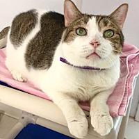 Adopt A Pet :: Kling - Stevensville, MD