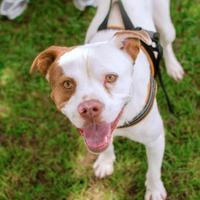 Adopt A Pet :: Sonny - Greenwood, SC