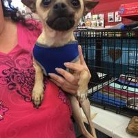 Adopt A Pet :: Sunshine - Tucson, AZ