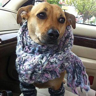 Beagle/Dachshund Mix Dog for adoption in Kaukauna, Wisconsin - Peanut