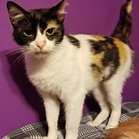 Adopt A Pet :: Bianca - South Bend, IN
