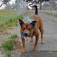 Adopt A Pet :: Ripcord - Crescent City, CA