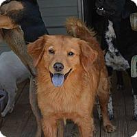 Adopt A Pet :: Gia - New Boston, NH