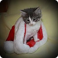 Adopt A Pet :: Petey - Xenia, OH