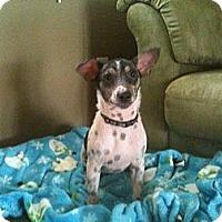 Adopt A Pet :: Tripp - York, SC