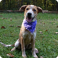 Adopt A Pet :: Vee - Mocksville, NC