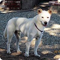 Adopt A Pet :: Jett - Los Angeles, CA