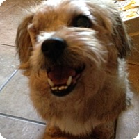 Adopt A Pet :: New Hope - Garland, TX