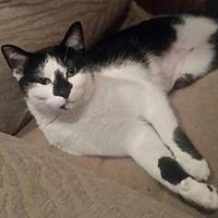 Adopt A Pet :: Henna - Livonia, MI
