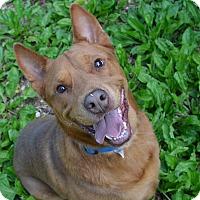 Adopt A Pet :: Marley - Broadway, NJ