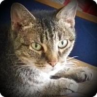 Adopt A Pet :: Cleo - Denton, TX