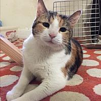 Adopt A Pet :: BOBBI! - Philadelphia, PA