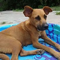 Adopt A Pet :: Sugar Pie - Houston, TX