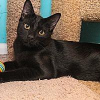 Adopt A Pet :: A..  Samons - Charlotte, NC