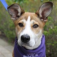 Adopt A Pet :: Johnny Bravo - Pacific Grove, CA