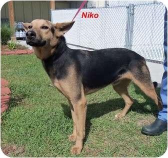 Shepherd (Unknown Type) Mix Dog for adoption in Slidell, Louisiana - Niko